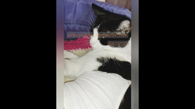 OHE Care Stray Cat 20210504 115450