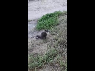 Видео от Пристрой кота