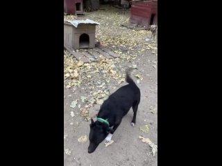 """Video by Официальная группа приюта """"Лучший друг"""""""