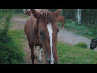 Video by Vadim Ismagilov