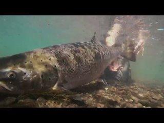 Robson and Jim's Icelandic Fly-Fishing Adventure:  Season 1 Episode 3 (itv HUB 2021 UK) (ENG)