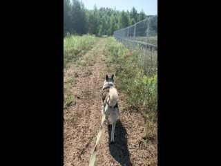 Yelena Knyazevatan video