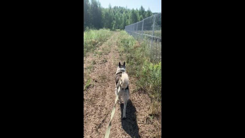 Видео от Елены Князевой