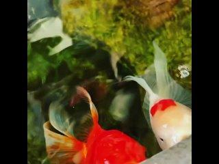 Vídeo de Аквариумные товары FISHKIN  Пушкин Славянка