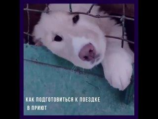 Видео от Лапа Дружбы