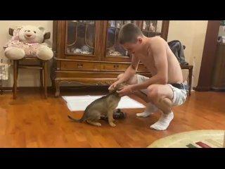 Video by Алиса и 11 щенят, Подольск