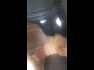 Добрый двор kullanıcısından video