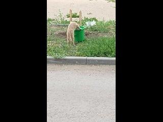 Кот Жажно поёт воду прямо из ведра!