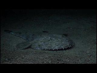 Планета Земля. BBC. 11 серия (заключительная) - Глубины океанов / Ocean Deep