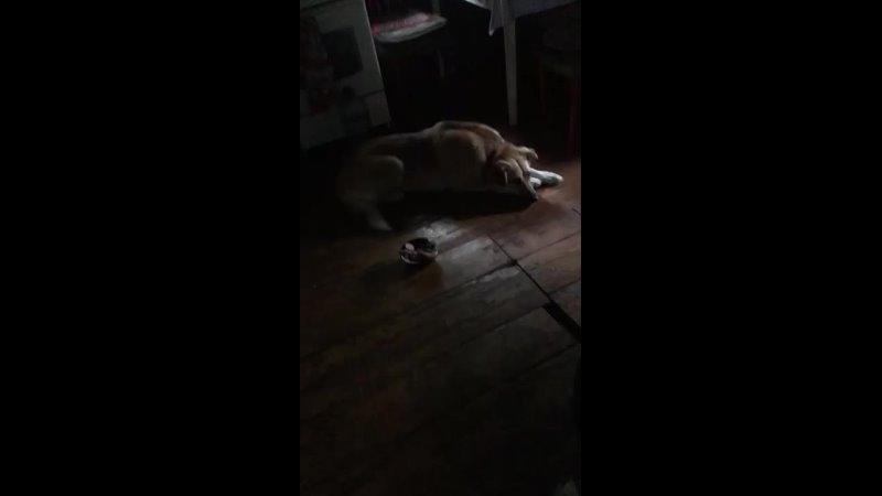 Видео от Старость в радость Томск