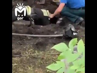 Во Владикавказе пожарные спасли из трубы шестерых щенков