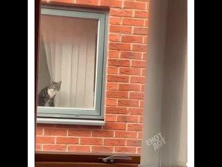 Такому соседу можно подсматривать за мной 😂
