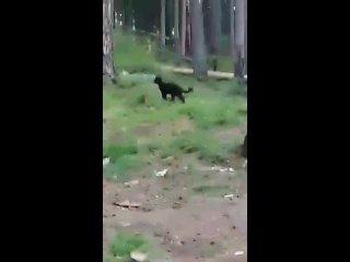 Vídeo de Inga Morozova