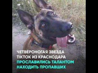 Четвероногая звезда TikTok из Краснодара прославились талантом находить пропавших