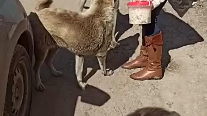 Видео от Фонд помощи бездомным животным г.Нижнекамск