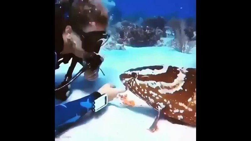 Ну привет рыбешка А давай дружить