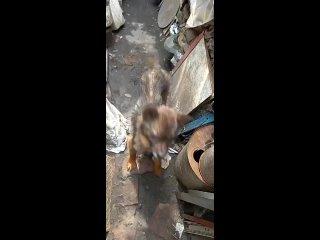 Video by Центр безнадзор. животных, Ростов. Волонтёры.