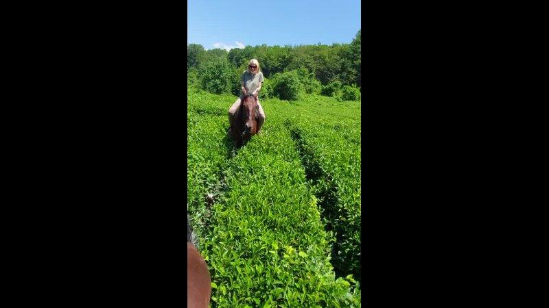 Видео от Конная база ФИШТ туры конные прогулки в Сочи
