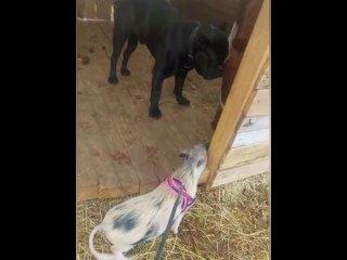 Видео от Корма для собак и кошек ProBalance®