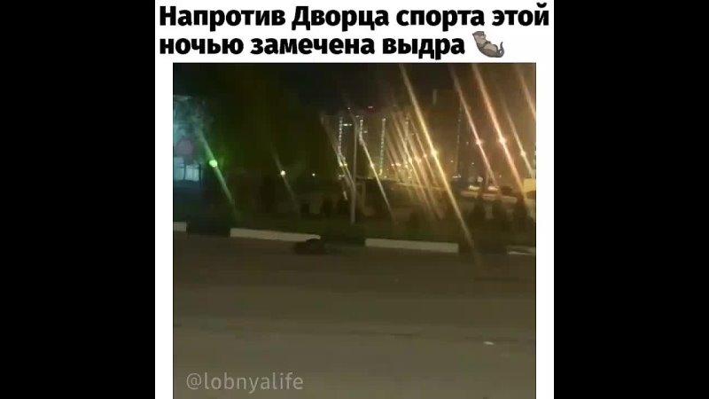 Крыса Да водяная Напротив Дворца спорта этой ночью замечена выдра Неизвестно что она затевает Но если животное покидает св