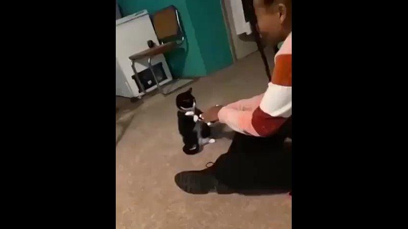 Кошачья путаница