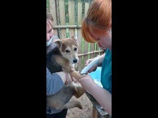 Video by Помощь бездомным животным г.Тверь
