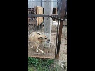 Видео от Собаки - бывшие смертники..