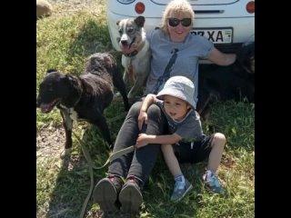 Видео от Хаёт. Приют для бездомных собак в Ташкенте