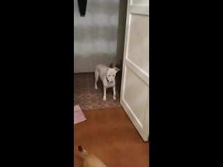 Video by Irina Samsonova