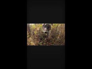 "Видео от БФ ""Сень Сотен Крыльев"""
