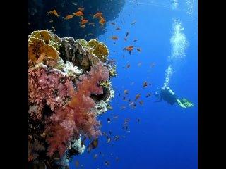 ЛУЧШИЕ МЕСТА ДЛЯ ДАЙВИНГА 🐠⠀Если вы мечтаете увидеть подводный мир своими глазами, то советуем рассмотреть следующие места:⠀