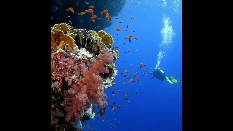 ЛУЧШИЕ МЕСТА ДЛЯ ДАЙВИНГА 🐠⠀Если вы мечтаете увидеть подводный мир своими глазами то советуем рассмотреть следующие места ⠀