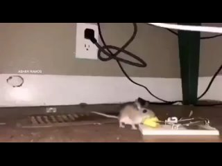mouse мышь watch about rolling down in the deep