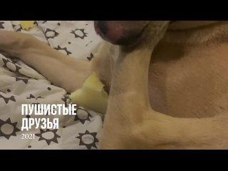 Видео от Золотые сердца ТЕРЕМКА