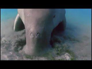 Планета Земля. BBC. 9-я серия - Мелководные моря / Shallow Seas