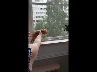 Video by Galina Shikova