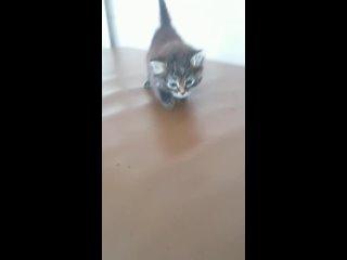 Помощь бездомным животным г. Вятские Поляны kullanıcısından video