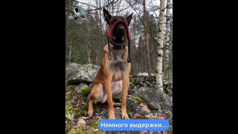 Видео от Василия Сиванова