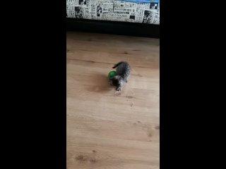 Video by Anna Volkova