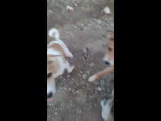 Видео от Елены Кобяковой