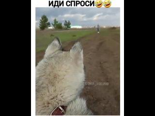 Умеете бегать (Мемарик,Приколы, mem, new, юмор, vine, мемы, новые,треш)