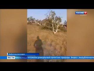 Video by Соль-Илецкий городской округ