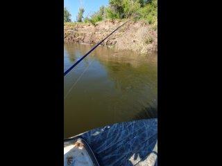 Video by Alexey Kolomiets