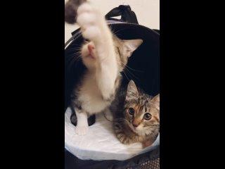 Видео от Lena Efimova