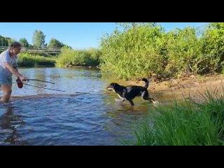 Video by Зоозащита. ИМ НУЖНА НАША ПОМОЩЬ! г.Псков