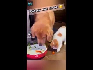 Пока кот думал, как приготовить рыбку, пришёл пёс и всех спас