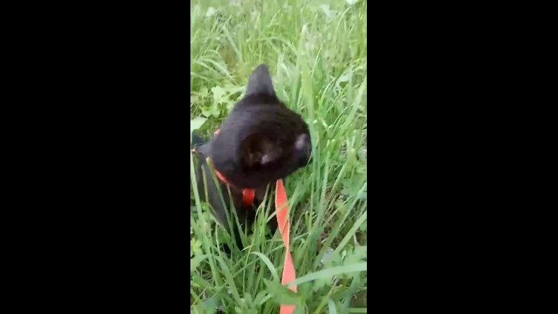 Видео от Помощь кошкам ЧЕТЫРЕ ЛАПКИ г Брянск