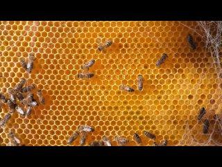 Сделан пчёлами, а не людьми...