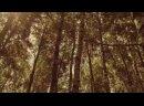 Видео от Звёздный Семейный и детский отдых