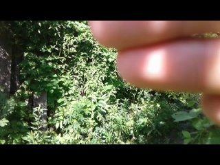 Гусеница - воздушный акробат-2